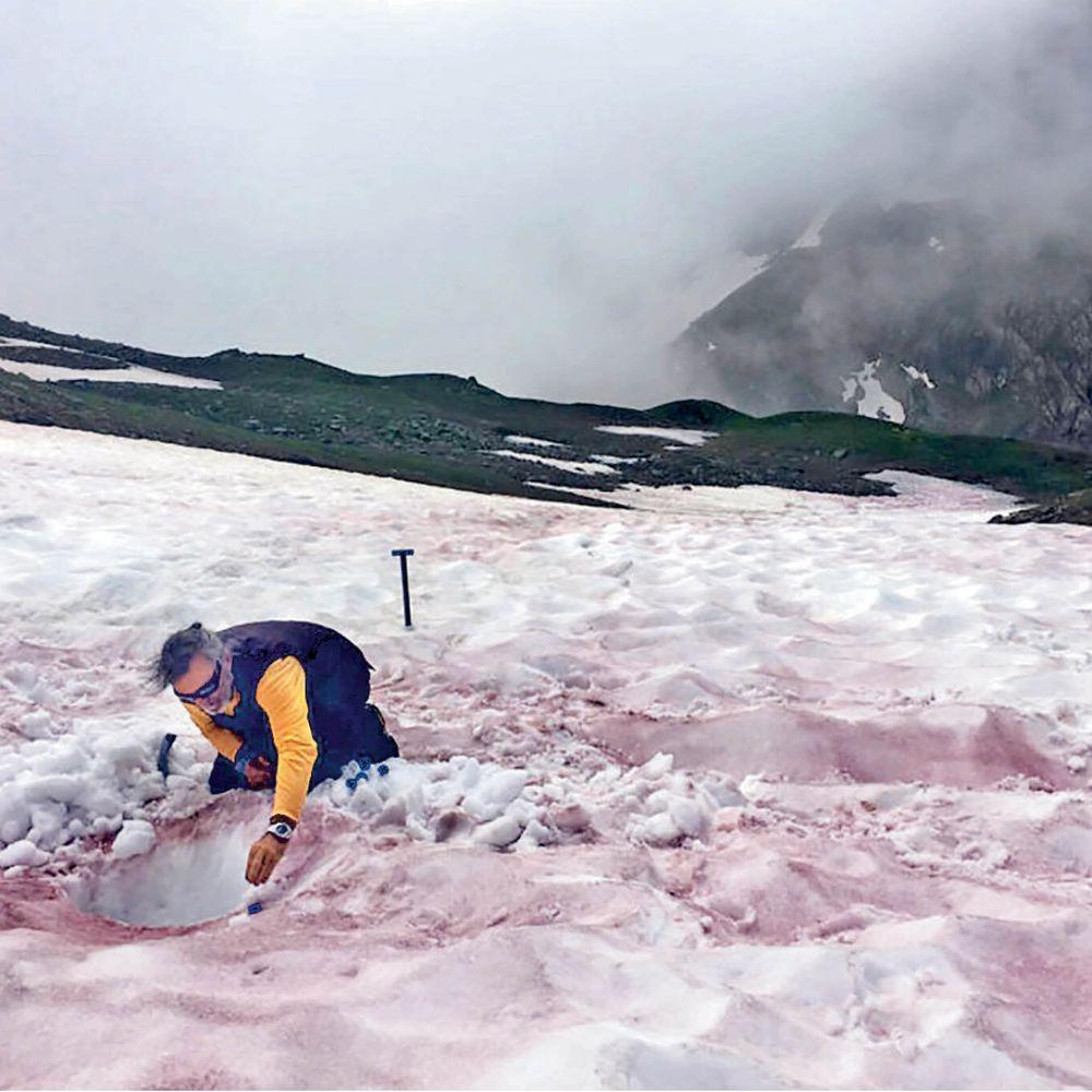फ्रांस की वॉटरमेलन स्नो:एल्प्स की पहाड़ियों पर 'खून बहा रहे' ग्लेशियर;सर्दियों में प्राकृतिक दूधिया सफेद रंग की चादर से ढंके होते हैं