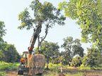 बुलेट ट्रेन रूट पर आने वाले 60 हजार पेड़ों में से 25 हजार ट्रांसप्लांट होंगे|देश,National - Dainik Bhaskar