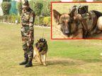 सेना ने डॉग स्क्वाड सर्विलांस सिस्टम बनाया, यह एक किमी के दायरे में दुश्मन की जानकारी भेजने में सक्षम|देश,National - Money Bhaskar