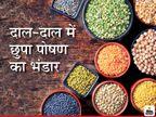 खाने में साबुत दाल भी शामिल करें, इसमें पोषण तत्वों का है खजाना, आयरन-कैल्शियम से लेकर मैग्नीशियम तक होती है पूर्ति|लाइफ & साइंस,Happy Life - Dainik Bhaskar