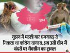 जानवरों से निकले वायरस को मारने उन्हीं की मदद से बन रही दवा; ब्रिटेन में चिंपैजी से लिया वायरस, चीन में बंदरों पर ट्रायल सफल कोरोना - वैक्सीनेशन,Coronavirus - Dainik Bhaskar