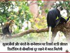 जानवरों को समझ आती है एक-दूसरे से दूरी बनाने की जरूरत, मादा बंदरों पर की गई रिसर्च में सामने आया|कोरोना - वैक्सीनेशन,Coronavirus - Dainik Bhaskar