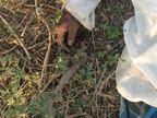 भिलाई में हुई थी बंगाल जा रहे श्रमिक की मौत,रिपोर्ट आई कोरोना पॉजिटिव, राजनांदगांव में भी एक ने तोड़ा दम छत्तीसगढ़,Chhattisgarh - Dainik Bhaskar