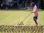 नीति आयोग के चेयरमैन बोले- कोरोना के बाद जैविक खेती में लोगों का रुझान बढ़ा, लोग खाने के लिए केमिकल फ्री सामान ढूंढ़ रहे|देश,National - Dainik Bhaskar