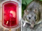 इंसानी कोशिका से विकसित हुआ लिवर चूहे में ट्रांसप्लांट किया गया, वैज्ञानिक बोले- भविष्य में जिसे ऑर्गन चाहिए उसी के डीएनए से बनेंगे लिवर|लाइफ & साइंस,Happy Life - Dainik Bhaskar