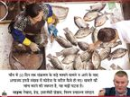 बीजिंग में मिले नए मामलों का सॉमन मछली से कनेक्शन, चीन इन मछलियों को नार्वे से इम्पोर्ट करता है|कोरोना - वैक्सीनेशन,Coronavirus - Dainik Bhaskar