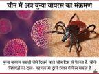 मकड़ी जैसे दिखने वाले जीव से फैला बुन्या वायरस, चीन में अब तक 60 लोग संक्रमित, 7 की मौत; मरीजों में बुखार-खांसी जैसे लक्षण|लाइफ & साइंस,Happy Life - Dainik Bhaskar