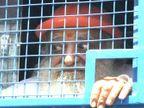 आसाराम को रास नहीं आ रहा है जेल का भोजन, हाईकोर्ट ने बाहर से मंगाने की दी अनुमति|राजस्थान,Rajasthan - Dainik Bhaskar