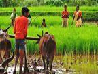 11 साल में 11 गुना बढ़ा कृषि बजट, 2009-10 में 12,000 करोड़ का था, 2020-21 में 1.34 लाख करोड़ रुपए पर पहुंच गया : गंगवार|बिजनेस,Business - Dainik Bhaskar