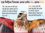 वैज्ञानिकों ने खोजी अनोखी चिड़िया, यह आधी नर है और आधी मादा; इसमें नर जैसे बड़े पंख हैं और दाहिने हिस्से में मादा जैसा अंडाशय लाइफ & साइंस,Happy Life - Dainik Bhaskar