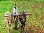 किसान क्रेडिट कार्डधारकों के लिए बैंकों ने दी 1.35 लाख करोड़ रुपए के रियायती कर्ज को मंजूरी, देश के डेढ़ करोड़ अन्नदाताओं तक पहुंचा लाभ|बिजनेस,Business - Money Bhaskar