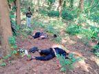 कांकेर में सुरक्षाबलों से मुठभेड़ में महिला नक्सली सहित 3 मारे गए; एक जवान भी घायल|छत्तीसगढ़,Chhattisgarh - Dainik Bhaskar