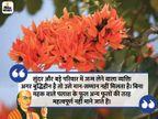 सुंदर और बड़े परिवार में जन्म लेने वाला व्यक्ति अगर बुद्धिहीन है तो उसे मान-सम्मान नहीं मिलता है|धर्म,Dharm - Dainik Bhaskar