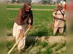 महिलाएं फावड़ा लेकर खेतों में उतरीं, ताकि न आंदोलन कमजोर पड़े न फसल; देखें फोटोज|पंजाब,Punjab - Dainik Bhaskar