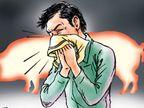 कोरोना और स्वाइन फ्लू बीमारियों के लक्षणों में ज्यादा फर्क नहीं, आईडीएसपी विंग ने कसी कमर हिसार,Hisar - Dainik Bhaskar