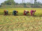 211 साल से लड़ रहे किसान; 41 वॉयसराय, 14 पीएम और 17 सरकारें बदल चुकीं, पर फसलों की कीमत का मुद्दा वहीं|जयपुर,Jaipur - Dainik Bhaskar