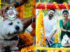 महाराष्ट्र के एक कपल ने अपने पेट डॉग के लिए किया गोद भराई का आयोजन, उसे फूलों से सजे झूले में बैठाया और आरती उतारकर दिया सम्मान लाइफस्टाइल,Lifestyle - Dainik Bhaskar