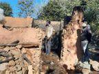 हिमाचल प्रदेश में आग लगने से दो गौशालाएं जलकर हुईं राख; 4 मवेशियों की गई जान|हिमाचल,Himachal - Dainik Bhaskar