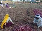 किसान की पत्नी बोली- ट्राली भरके प्याज सिर्फ 28 हजार में बेचना पड़ी, 5500 रु. तो तुड़ाई-ढुलाई में ही खर्च, मेहनत और बीज-दवा अलग ही है..|अलवर,Alwar - Dainik Bhaskar