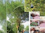 सूरत में कार ने मारी टक्कर, बाइक सवार 3 साल की बच्ची उछलकर 20 फीट ऊंची पेड़ की डाल पर लटकी, मौत|गुजरात,Gujarat - Dainik Bhaskar