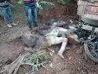 बाइक को टक्कर मारने के बाद घसीटते हुए खेत तक ले गया टेंपो, तीन युवकों के शव तक पहचानना हुआ मुश्किल|गुजरात,Gujarat - Dainik Bhaskar