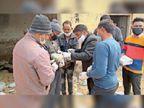 जहरीले दाने से 56 मोर और 15 अन्य पक्षी मरे चिकित्सा टीम ने 25 मोरों को उपचार दे बचाया|नागौर,Nagaur - Dainik Bhaskar