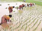 छत्तीसगढ़ से 24 लाख टन चावल खरीदेगा केंद्र, सीएम ने कहा - उम्मीद है भविष्य में और चावल लेने की स्वीकृति भी मिलेगी|छत्तीसगढ़,Chhattisgarh - Dainik Bhaskar