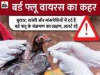 बर्ड फ्लू वायरस का देश में 6 राज्यों में कहर, यह इंसानों को संक्रमित कर सकता है; ये लक्षण दिखने पर अलर्ट हो जाएं|लाइफ & साइंस,Happy Life - Dainik Bhaskar
