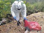 पौंग बांध में मारे गए पक्षियों में मिला एच5एन1 एवियन इंफ्लूएंजा वायरस|शिमला,Shimla - Dainik Bhaskar