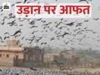 प्रवासी प्रक्षियों पर मंडराने लगा अब बर्ड फ्लू का खतरा, राजस्थान में लाखों की संख्या में डेरा जमाए हैं परिन्दे|जोधपुर,Jodhpur - Dainik Bhaskar