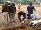 श्रीमाधोपुर के मउ में 8 पक्षी मृत मिलने से इलाके में हड़कम्प, 2 सैंपल जांच के लिए भोपाल भेजे गए; बाकी को दफनाया|सीकर,Sikar - Dainik Bhaskar