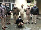 उत्तर प्रदेश से पंजाब में अफीम की सप्लाई देने आया तस्कर जालंधर से गिरफ्तार|जालंधर,Jalandhar - Dainik Bhaskar