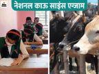 केंद्रीय पशु पालन मंत्रालय गाय पर आयोजित करेगा परीक्षा, हिंदी-इंग्लिश समेत 12 क्षेत्रीय भाषाओं में ऑनलाइन होगा एग्जाम|करिअर,Career - Dainik Bhaskar