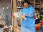 7 दिन चिकन और मुर्गा-मुर्गी का व्यवसाय लॉक, इंदौर में रोज हाेता है 42 लाख का कारोबार, पोल्ट्री फाॅर्म वाले बोले - कर्ज लेकर काम शुरू किया अब क्या होगा इंदौर,Indore - Dainik Bhaskar