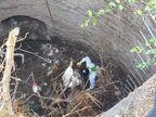 कोटा में दो सांड आपस में लड़ते हुए कुएं में गिरे,निगम व SDRF की टीम ने 3 घण्टे रेस्क्यू कर बाहर निकाला, एक सांड की मौत|कोटा,Kota - Dainik Bhaskar