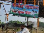 बांदा के अफसरों ने नहीं सुनी तो ग्रामीणों ने बनवाई गोशाला; भूसा बैंक में तीन माह के चारे का किया भंडारण झांसी,Jhansi - Dainik Bhaskar