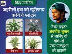 कमरे और बगीचे में लगाएं बैम्बू पाम और पीस लिली जैसे पौधे, ये पॉल्यूशन का असर कम करेंगे; जानिए इन्हें लगाने का तरीका लाइफ & साइंस,Happy Life - Dainik Bhaskar