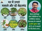 अदरक सर्दी-खांसी से बचाएगा और अजवाइन बवासीर से राहत देगी, जानिए घर पर कैसे उगाएं मसालों के पौधे लाइफ & साइंस,Happy Life - Dainik Bhaskar