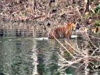 नीलगाय, तेंदुए और बाघ के पगमार्क मिले; सतपुड़ा टाइगर रिजर्व में पशु गणना का काम शनिवार को पूरा|सोहागपुर,Sohagpur - Dainik Bhaskar