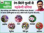 सर्दियों में आपकी बगिया में चार चांद लगाएंगे ये रंग-बिरंगे फूलों वाले पौधे, जानिए इन्हें लगाने और देखभाल का तरीका लाइफ & साइंस,Happy Life - Dainik Bhaskar