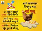 राजस्थान में अब तक पोल्ट्री फार्म में संक्रमण का एक भी केस नहीं आया, लेकिन डर से 23% गिरे चिकन के रेट; खपत भी एक तिहाई घटी|जयपुर,Jaipur - Dainik Bhaskar