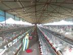 20 दिन में आधी हुई चिकन की बिक्री; दाम में 25 फीसदी की गिरावट, अंडा भी सस्ता|रांची,Ranchi - Dainik Bhaskar