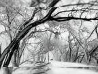 6 डिग्री गिरा तापमान, अभी ऐसा ही रहेगा मौसम|चंडीगढ़,Chandigarh - Dainik Bhaskar