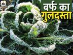 माउंट आबू में 6 दिनों से लगातार पारा माइनस में, 10 शहरों में न्यूनतम तापमान 5 डिग्री से कम|राजस्थान,Rajasthan - Dainik Bhaskar