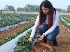 बुंदेलखंड की बंजर जमीन पर स्ट्रॉबेरी उगा रही लॉ ग्रेजुएट; हर महीने लाखों की कमाई, PM कर चुके हैं तारीफ|ओरिजिनल,DB Original - Dainik Bhaskar
