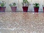 जिले में कई जगह बारिश, अलवर में ओले गिरे; अगेती सरसों को नुकसान की आशंका|अलवर,Alwar - Dainik Bhaskar