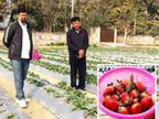 10 साल टीचर रहे, कोरोना में नौकरी में परेशानी आई तो स्ट्रॉबेरी की खेती शुरू की, आज लाखों का मुनाफा|ओरिजिनल,DB Original - Dainik Bhaskar
