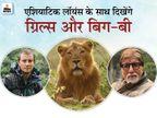 अब गुजरात के गिर में हो सकती है मैन vs वाइल्ड की शूटिंग, बेयर ग्रिल्स के साथ अमिताभ नजर आ सकते हैं|गुजरात,Gujarat - Dainik Bhaskar