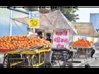किन्नू का स्वाद अब भी आम आदमी की जेब में, मौसम बदलने के साथ बढ़ी डिमांड, 7 से 22 रुपए प्रति किलो के भाव से बिक रहा|जोधपुर,Jodhpur - Dainik Bhaskar
