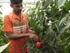 पारंपरिक तरीका छोड़ सरकारी सब्सिडी की मदद से नीदरलैंड की कलर्ड शिमला मिर्च की खेती शुरू की, अब हर साल 5 लाख की कमाई|ओरिजिनल,DB Original - Dainik Bhaskar